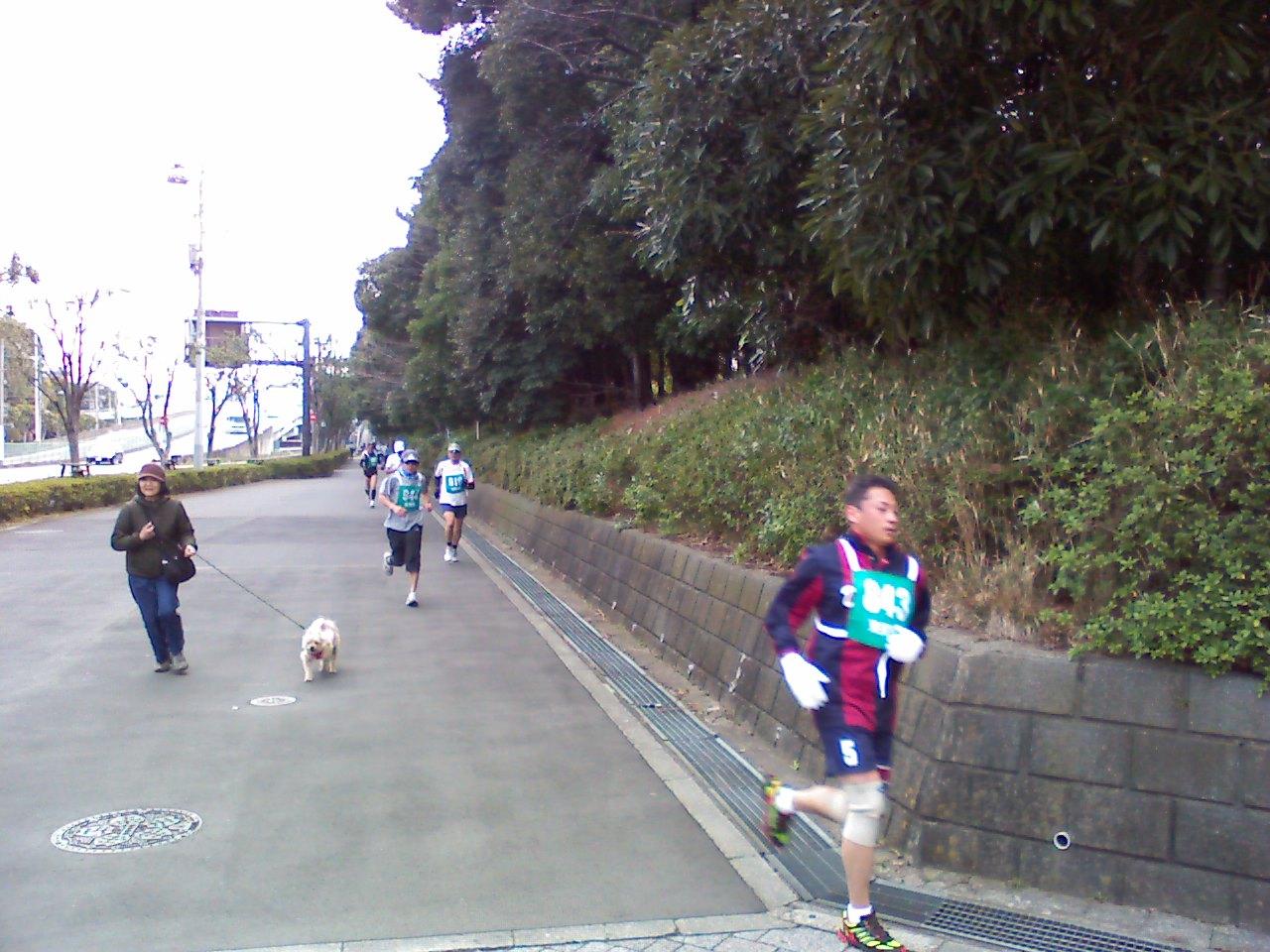大井の健康マラソンに参加しました
