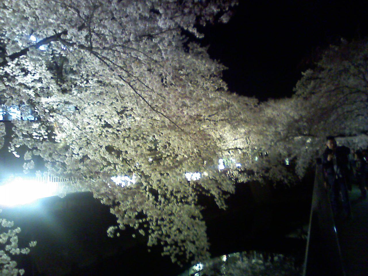仙川東宝の桜