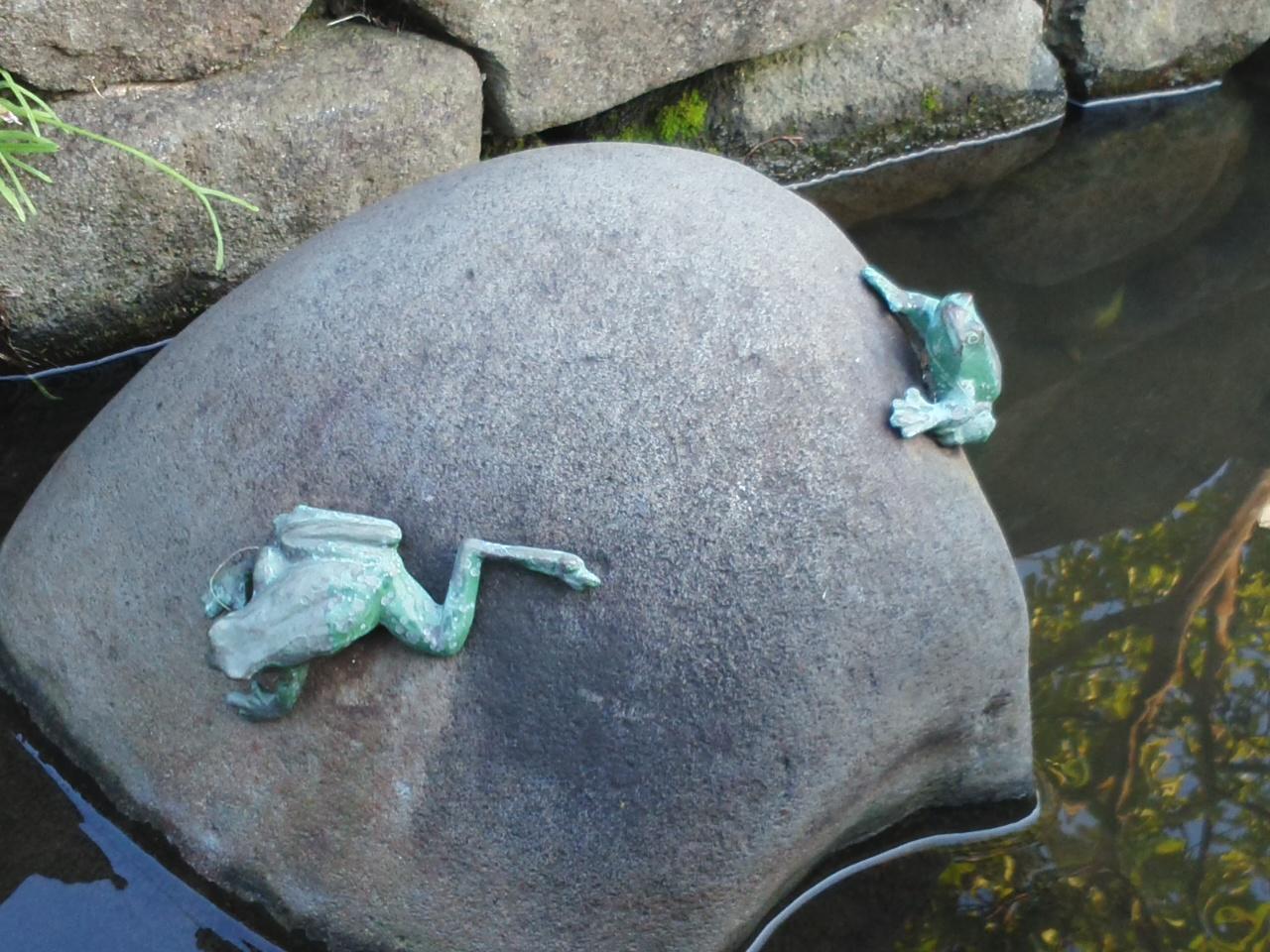 今日のカエル